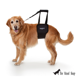 GingerLead Dog Support & Rehabilitation Harness for Female Dogs